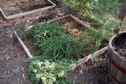 thyme, oregano, chives, dill