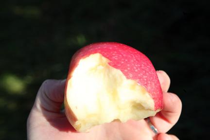 081109-apples-51